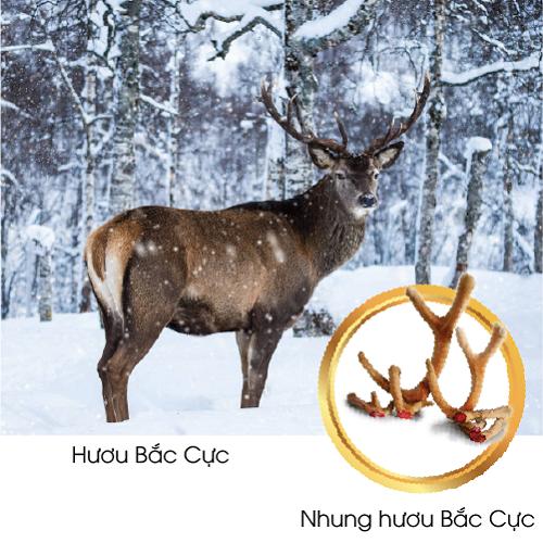 nhung-huou-bac-cuc